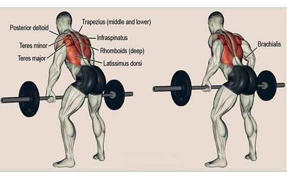 Targeted Gym Exercises For Back Fat Healthnwellness